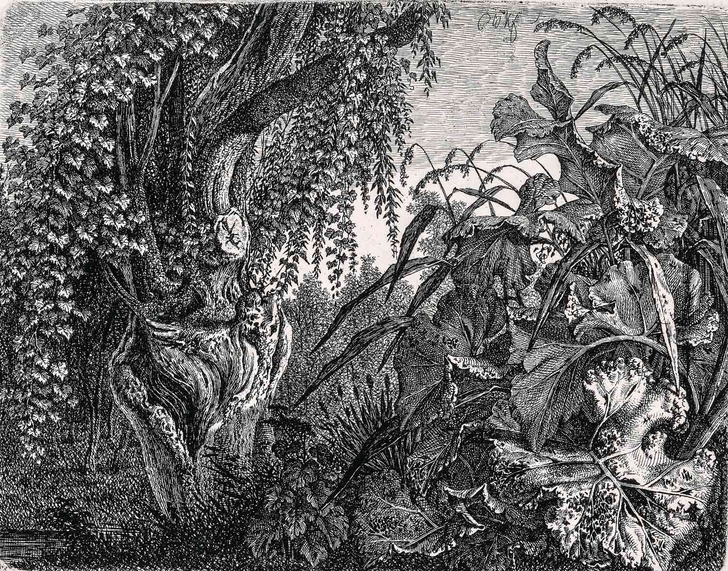 Carl Wilhelm Kolbe (1759-1835), A Thicket; a Gnarled Willow Tree at Left, a Thicket of Vegetation at Right, 1820/35 (probably about 1820), etching. MMFA, purchase, Wake Robin Fund in memory of Nelo St.B. Harrison