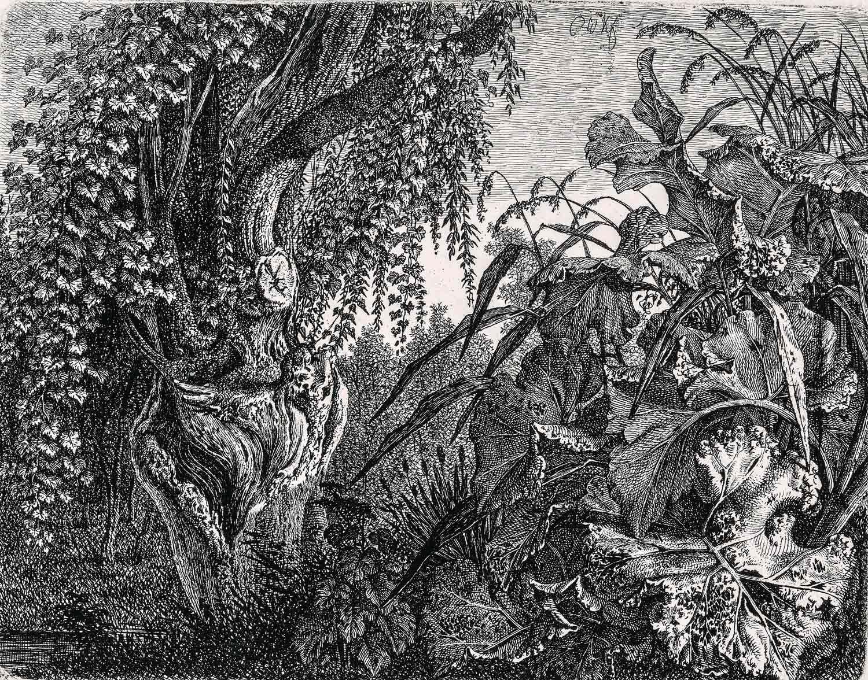 Carl Wilhelm Kolbe (1759-1835), Un fourré : un saule noueux à gauche et un massif de végétation à droite 1820/35, (probablement vers 1820), eau-forte. MBAM, achat, fonds Wake Robin à la mémoire de Nelo St.B. Harrison